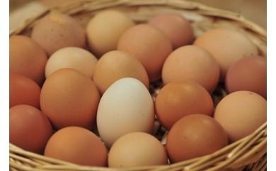 11 平飼いニワトリ卵セット