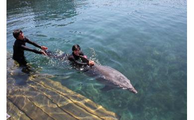 E-091 イルカと泳ごう!ペアチケット