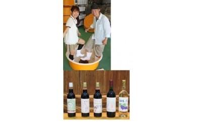 B-い 29 65 ぶどうの足ふみ ワイン・ジュース作り体験プラン