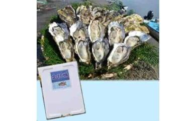 B-9 能登穴水の牡蠣(殻付)加熱用3kg