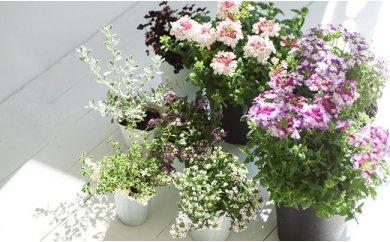 [№5674-0146]10ヵ月間 毎月つづく 花のある生活 季節のお花セット