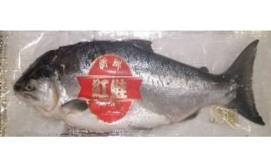 甘塩 紅鮭1尾  LLサイズ