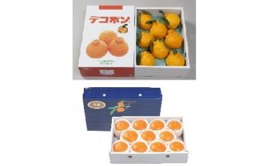B-4 柑橘セット(デコポン・美娘) ※12月1日~12月25日頃