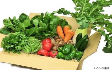 Qd-04 四万十町の新鮮野菜詰め合わせ10種類