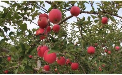 C-6 りんご サンふじ5kg