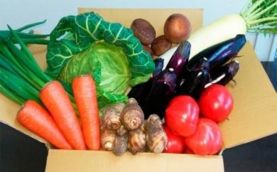 [№5789-0024]とれたて新鮮やっちゃ場野菜セット