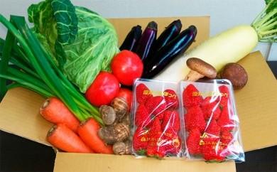 [№5789-0023]とれたて新鮮やっちゃ場野菜・果物セット