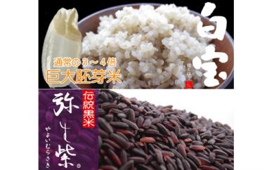 007-006 ⑪健康サポート米 巨大胚芽米「白宝15kg」伝統黒米「弥生紫2kg」