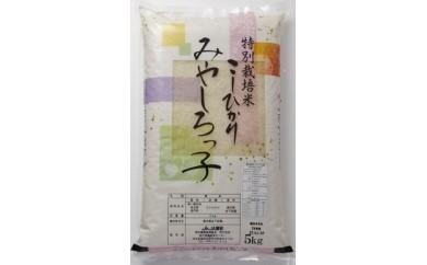 宮代産特別栽培米コシヒカリ「みやしろっ子」10kg