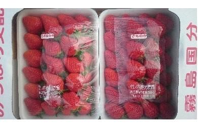 A-051 イチゴ2品種詰め合わせ