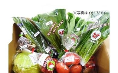 C-2 直送野菜おまかせパック(6ヵ月分)