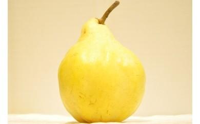 【01-116】三条果樹専門家集団 特大ル レクチエ※クレジット決済限定