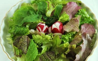 B2 ★有機JAS(日本農林規格)認定★ サガンベジの美味しい満足サラダ・ミニセット