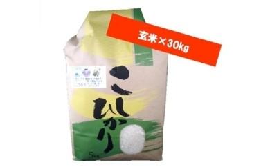 C-6 森田さんちのお米(玄米)