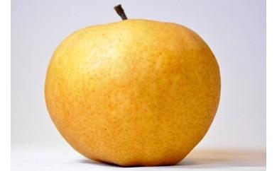 【01-114】三条果樹専門家集団 梨 特大愛宕※クレジット決済限定