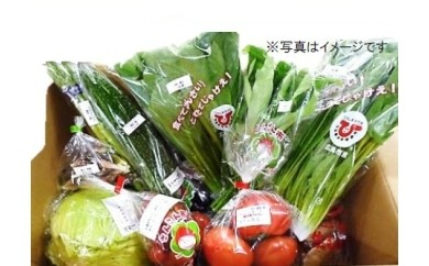 D-1 直送野菜おまかせパック(12ヵ月分)