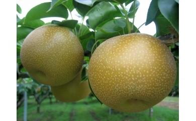 【18050】あきづき梨