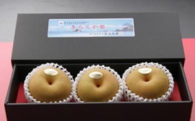 [№5683-0046]藤岡さんが作った氷温保存きららか梨 3玉入り