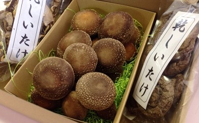 [№5821-0002]椎茸セット