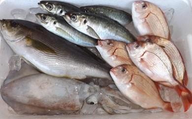 【B09001】魚屋さんの選んだ新鮮お魚詰め合わせ