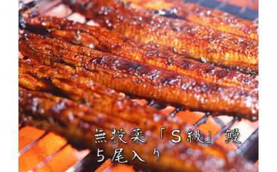 YB63 大隅産無投薬鰻☆泰正オーガニック  蒲焼き5尾【85p】