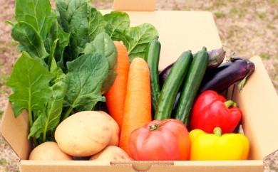 [№5773-0016]合志の旬のお野菜セット