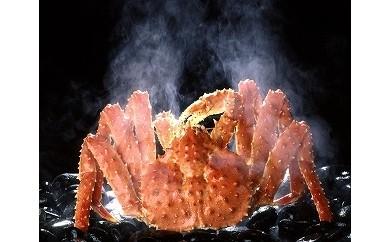 CC-54002 根室湾中漁協本タラバガニ(活時約2.8kg×1尾)プレゼント付き!※出荷作業及びさばき方など、動画でご覧いただけます。[83441]