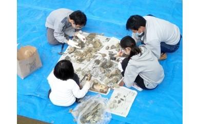 Fコース 学芸員と一緒に昆虫館バックヤードツアー  平成28年11月19日(土)実施