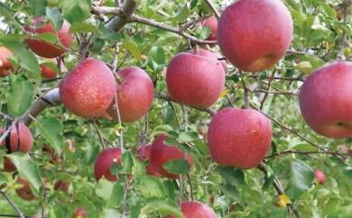 たてしなりんご サンふじ(特秀16~18玉) 数量限定