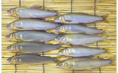 【平成30年産】高知県東部の天然鮎10匹(14cm~16cm)