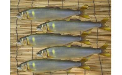 【平成30年産】高知県東部の天然鮎5匹(17cm以上)