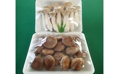 富士山タマチョレイ茸、紅富士茸(椎茸)、エリンギ「美味しいきのこセット」