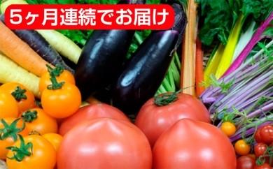 [№5824-0074]旬野菜8品目のセット 5回頒布