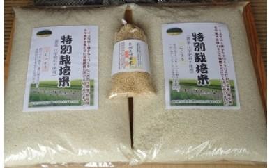 39 掛川産 こだわり米10kg+玄米3号セット