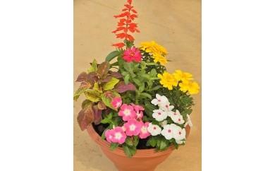 季節の花 寄せ植えセット