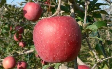「りんご」(公共施設ご招待券付き)