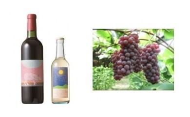 B-3 安心院*小さなワイン工房ワイン(赤・デラウエア)&ぶどう2【季節限定】
