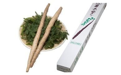 AW10 自然薯「愛薯さん」1.2kgセット【35pt】