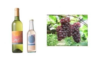 B-7白ワイン・微発泡ピオーネ&ぶどう(デラウェア)