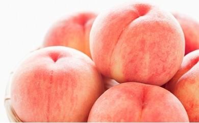 [№5839-0005]フルーツ王国山梨の桃