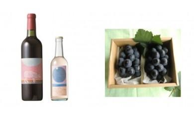 B-28 安心院*小さなワイン工房ワイン(赤・ピオーネ)&ぶどう12【季節限定】