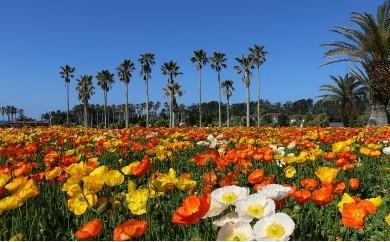【A02】館山季節の花