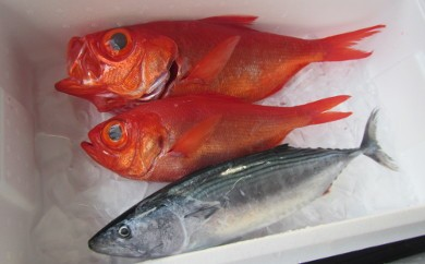K-1◆安田町近海で水揚げされた鮮魚と金目鯛2匹セット