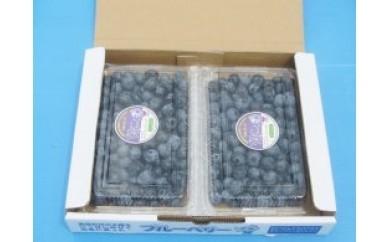 AC07 ブルーベリーカントリー井戸園芸産 完熟フレッシュブルーベリー「400g×2パック」【20p】