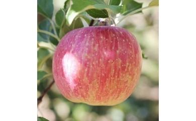 長野県産 りんご(サンつがる) 5kg 秀品