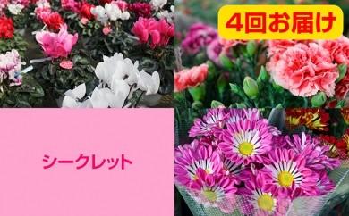 [№5664-0030]農家直送 春夏秋冬 四季の花 4回お届けセット(頒布会)