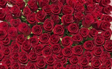 [№5691-0143]赤バラの花束 365本「あなたが毎日恋しい」