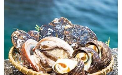 【F】うすき貝類詰め合わせ