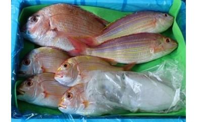 D102 朝市、朝競り、朝出荷!目利きの鮮魚「A」セット(鮮魚4~5種類 約4kg)