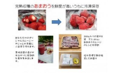 AA11 武下さんちのあまおう 冷凍2.4kg入り!【15,000pt】
